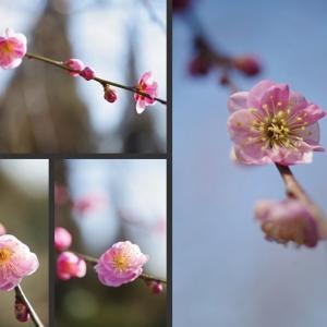 庭に咲く花木達 紅梅が咲き始めました!
