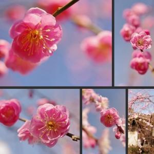 今日の庭の花木達です!