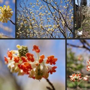 春の庭の花木が見頃となっています!