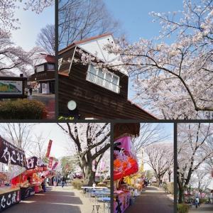 満開の桜を観てきました その1!