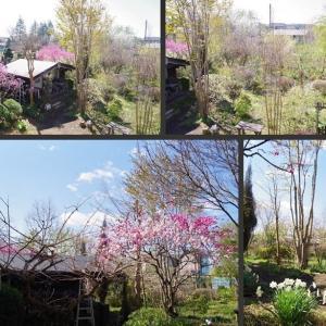 青空の下 春の庭の風景です!