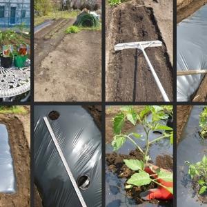 トマトやナス等野菜苗の植付をしました!