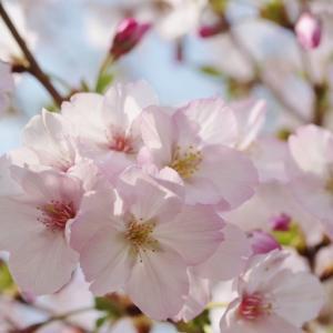 今日の庭で見頃となった花と咲き始めた花です!