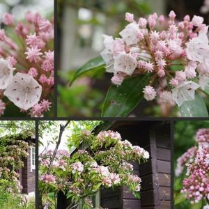 我が家の庭に咲き始めた花達です!