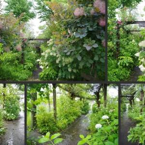 雨の庭の風景です!