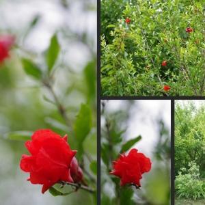 今日の果樹エリアの植物達です!
