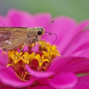 マクロレンズで昆虫や水滴を撮影しました!