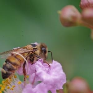 庭に集まる虫達 マクロレンズで撮影しました!