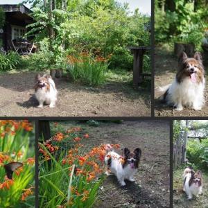 今日の庭とマロンの散歩です!