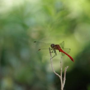 カメラで昆虫採集をしました!