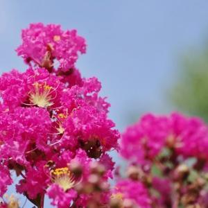 今日の庭の植物 花木編!