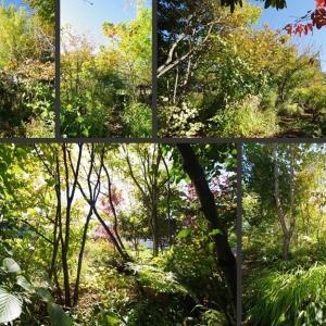 快晴の庭の風景です!