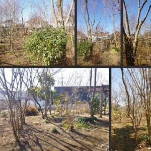 雑木の庭の樹木剪定をしました!