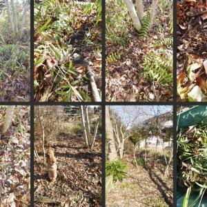 雑木の庭の残っていた場所の整備をしました!