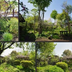 雨上がりで快晴の庭の風景です!