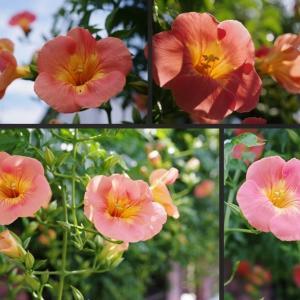 玄関周辺の夏らしい花達です!
