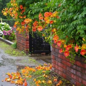 雨の降る庭の風景です!