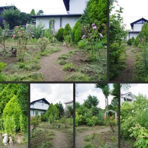 夏の庭の風景です!