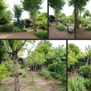 真夏の庭の風景です!