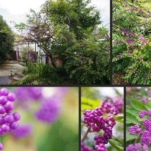 玄関周辺の庭の植物達です!