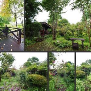 台風接近中の庭の風景です!