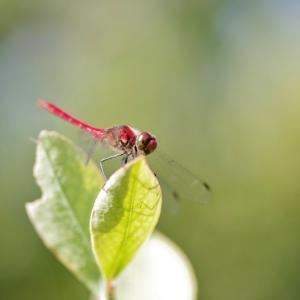 庭に集まる昆虫達です!