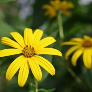 庭に咲く野草・雑草の花達です!