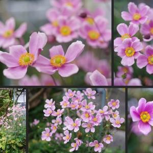 玄関周辺の庭の草花達です!