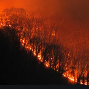 足利の山火事つづく