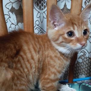 子猫続報&緑色の目の猫