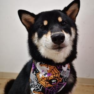 犬用ハロウィンバンダナ