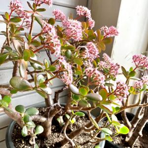 春は五臓六腑の肝に影響が出やすい