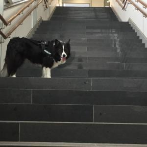犬も歩けば