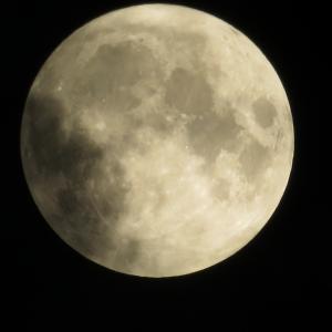 薔薇とひぐらしと満月