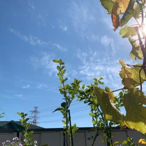 【大ちゃんのコメントあり】秋晴れ!
