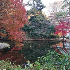 清水谷公園 紅葉