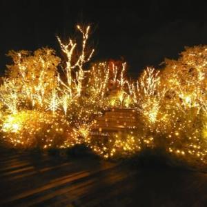 高島屋タイムズスクエアビル 屋上庭園のライトアップ