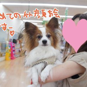 ディワン小牧店さんでわんこ似顔絵&色塗りワークショップ(2019年9月14日)