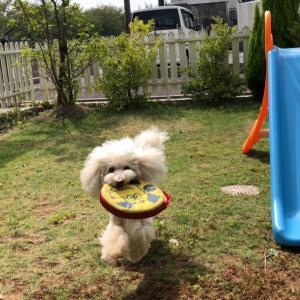 10月5日は「犬祭ー里山」でわんこ似顔絵!プレゼント持って行きますよ~