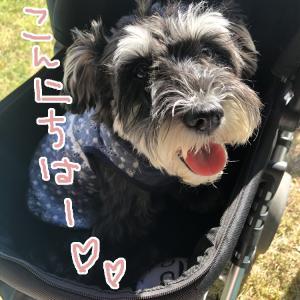 <後半>2019年10月5日(土)岐阜県の「犬祭ー里山」でわんこ似顔絵