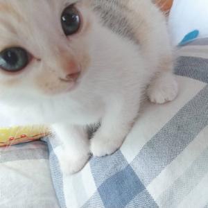 子猫(=゚ω゚=)