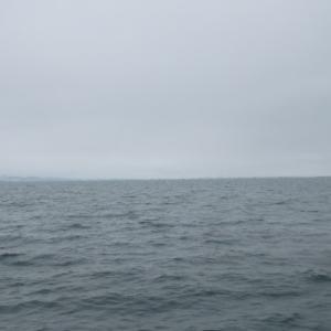 5月20日の琵琶湖 寒い、寒い、寒い雨なのにハス?