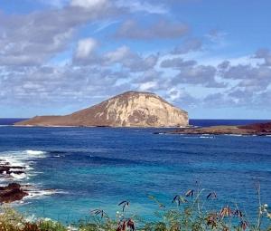 ハワイの12月2日、久しぶりにハレイワへ!