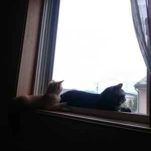 窓辺の過ごし方