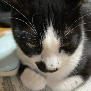 ☆可愛い猫たち&お試し☆