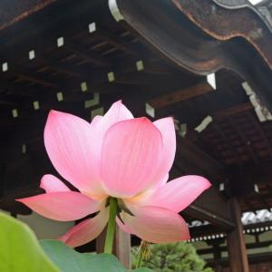 蓮の咲く寺院(京都・法金剛院)