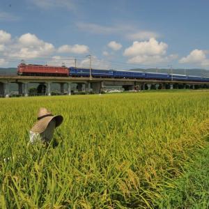 稲穂と鉄道