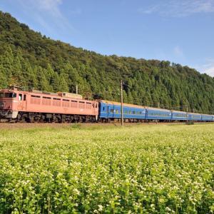 蕎麦の花と鉄道(ブルートレインなど)