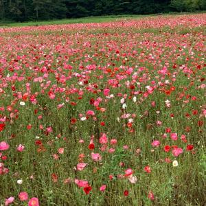山中湖お花の公園です
