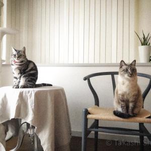 猫とインテリアはシンプルにしたい